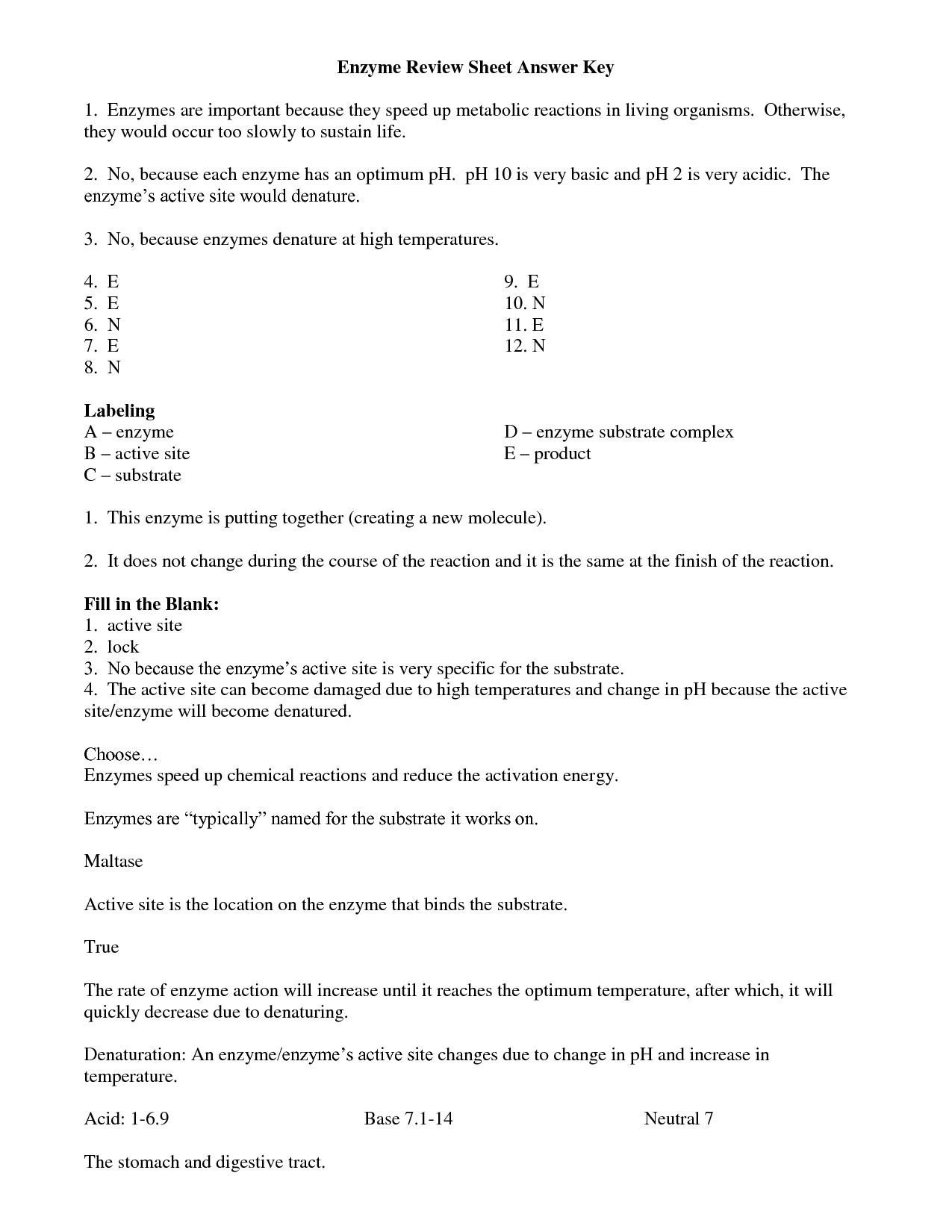 13 Best Images Of Enzyme Practice Worksheet Answers