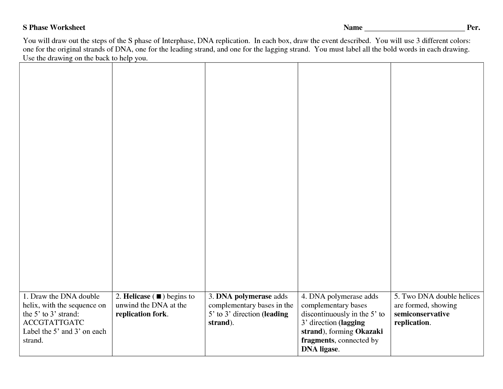 Dna Replication Worksheet Fillable