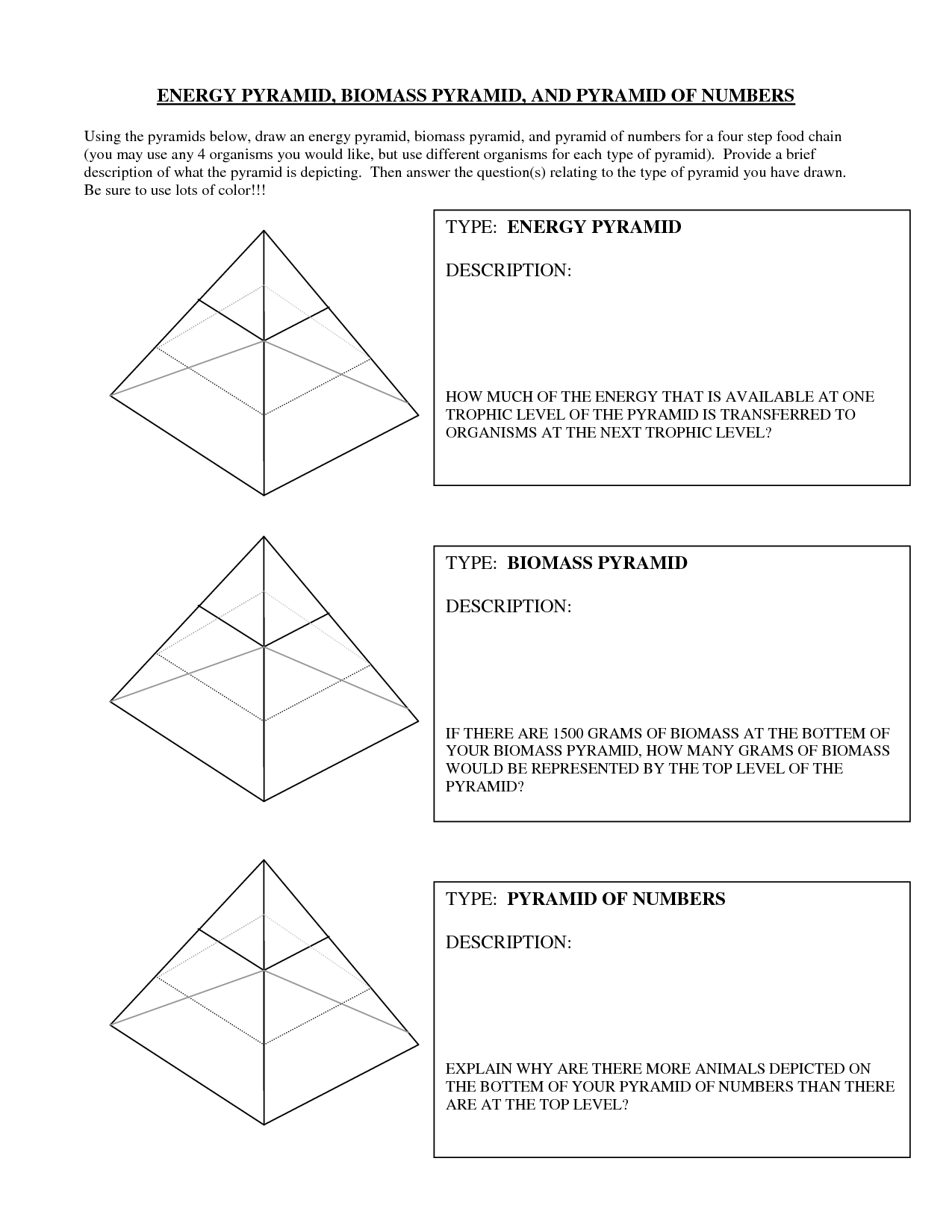 12 Best Images Of Energy Pyramid Worksheet Middle School