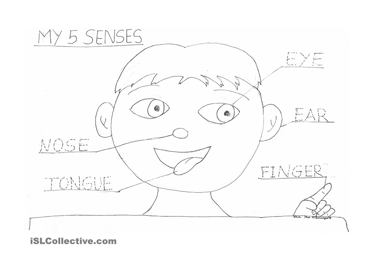 12 Best Images Of My Five Senses Worksheets For
