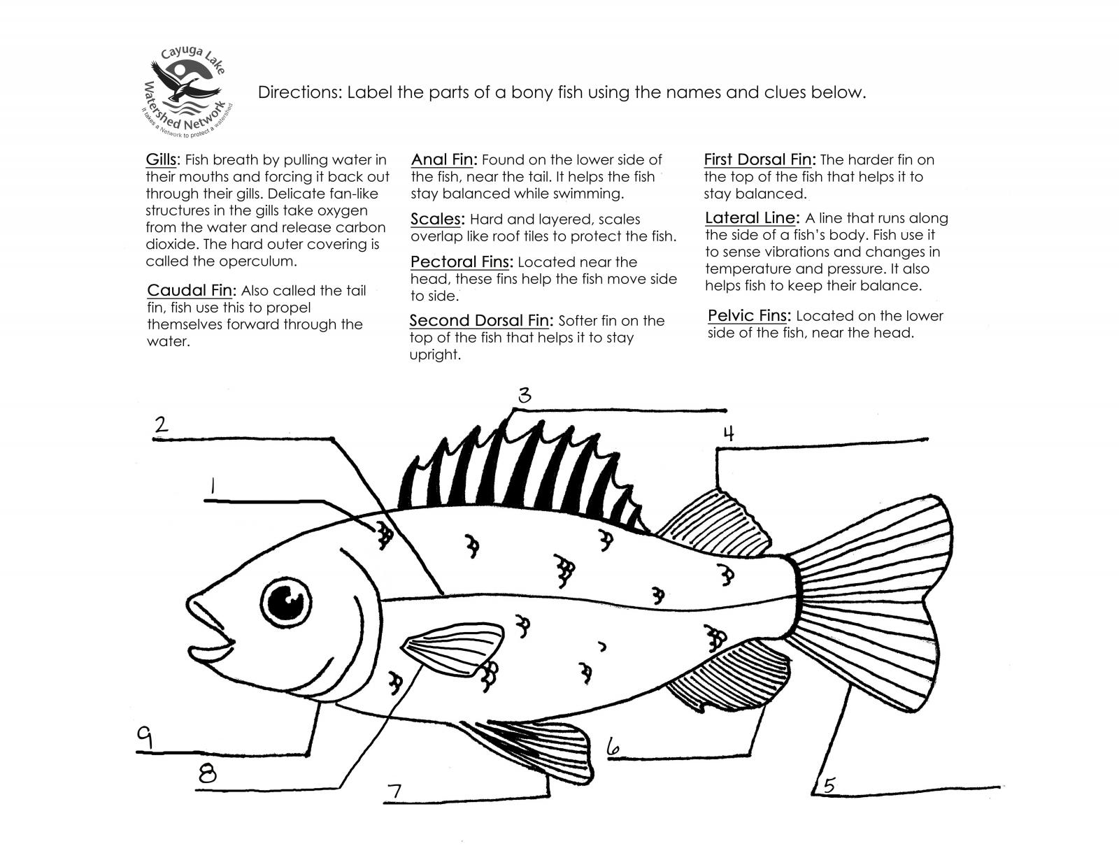 16 Best Images Of Shark Labeling Worksheet