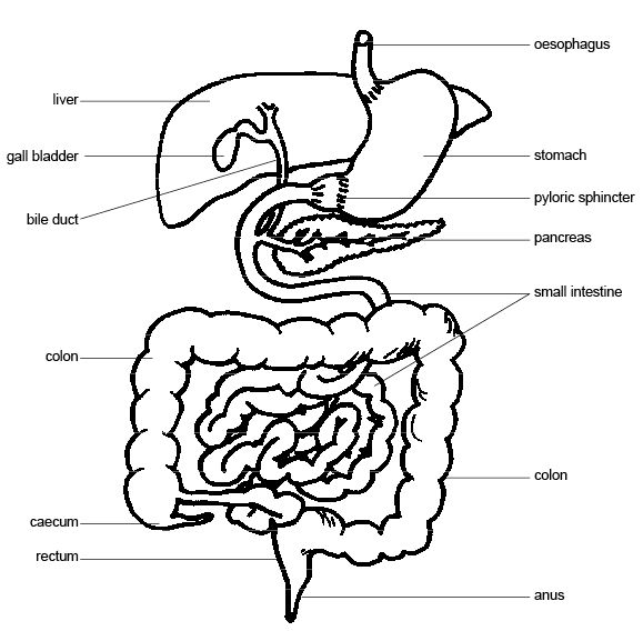 15 Best Images of Human Anatomy Physiology Worksheets ...