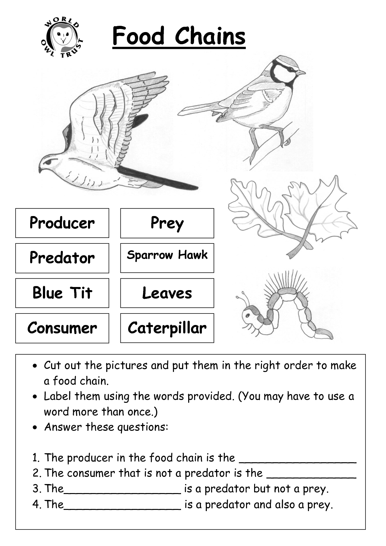 11 Best Images Of Food Chain Worksheets 2nd Grade