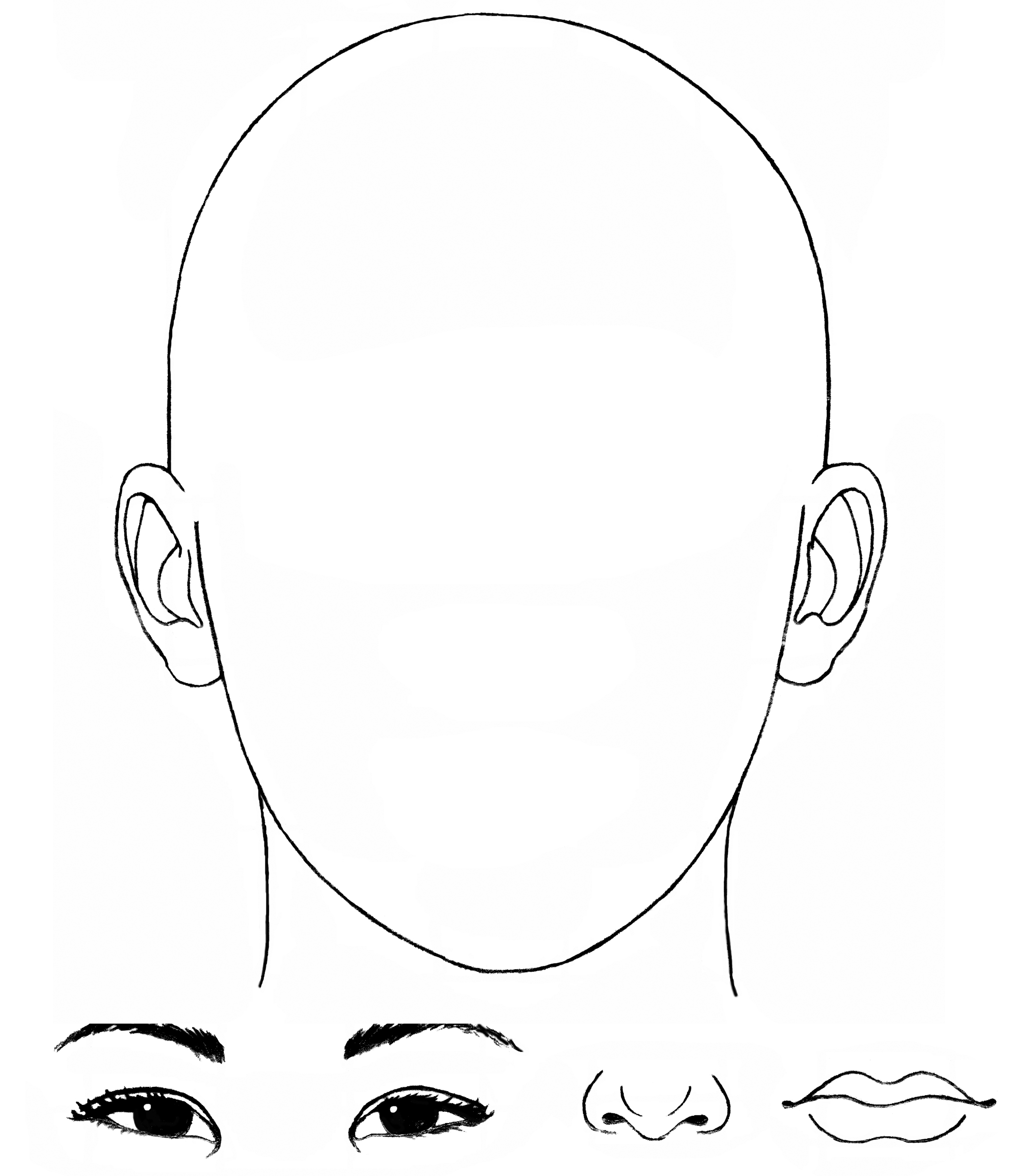 11 Best Images Of Facial Proportions Worksheet