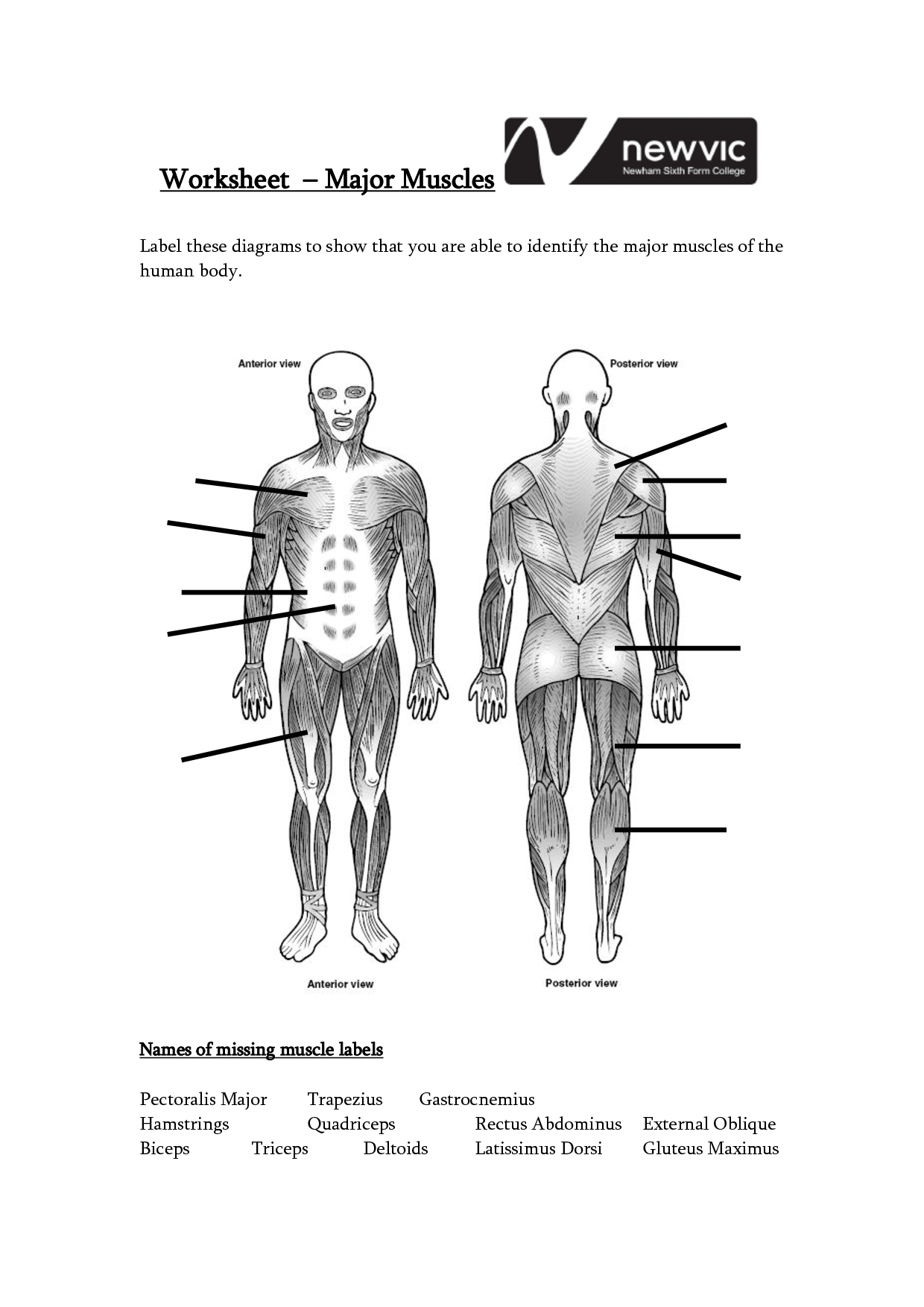 Human Body Basics Worksheet