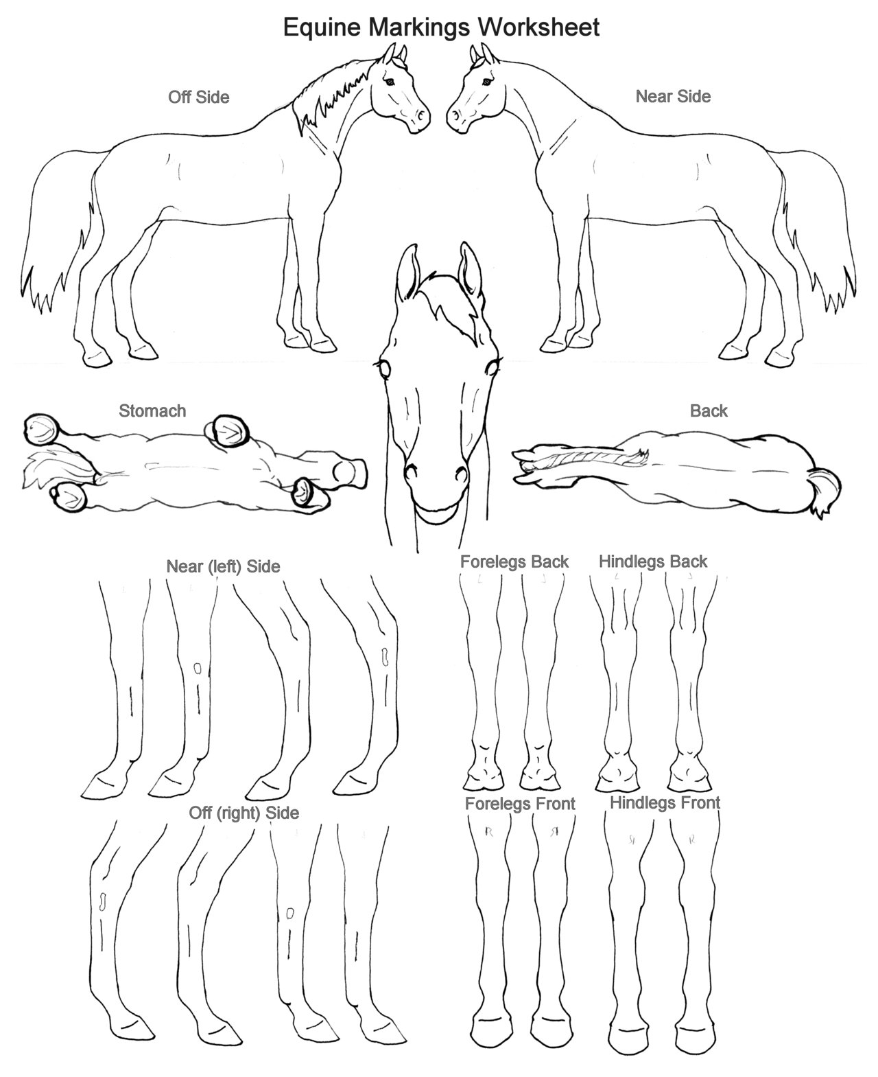 15 Best Images Of Horse Anatomy Worksheets