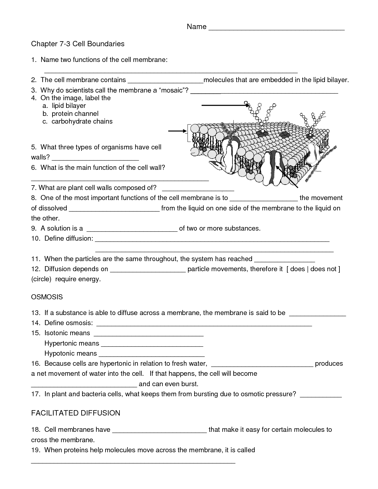 18 Best Images Of Biology Worksheets With Questions