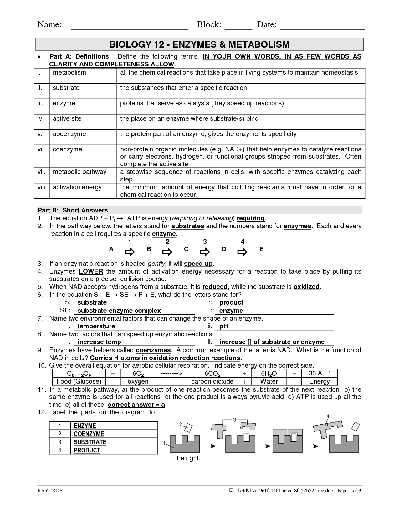 31 Chemical Reactions And Enzymes Worksheet Answers