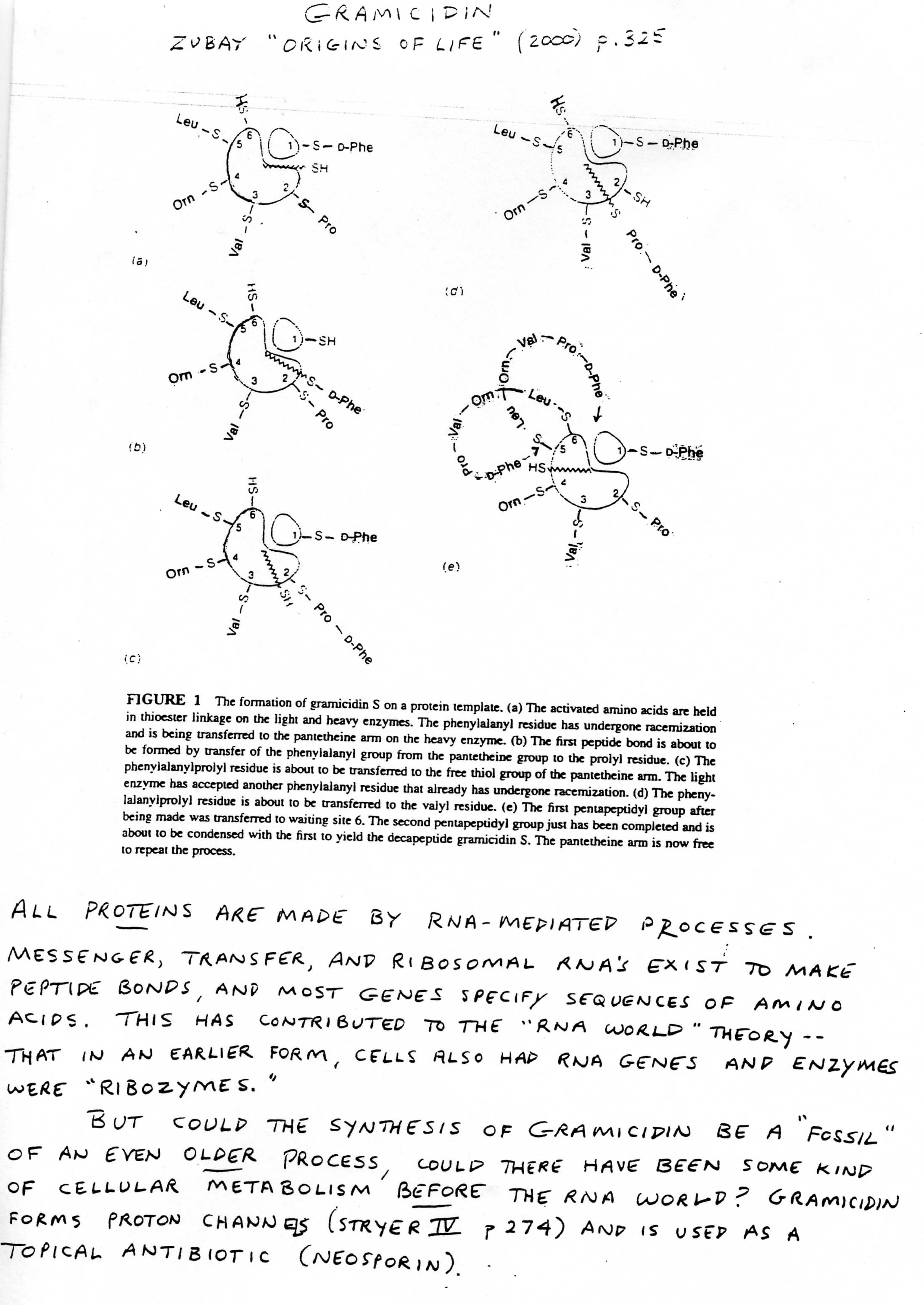 16 Best Images Of Biomolecule Structure Worksheets