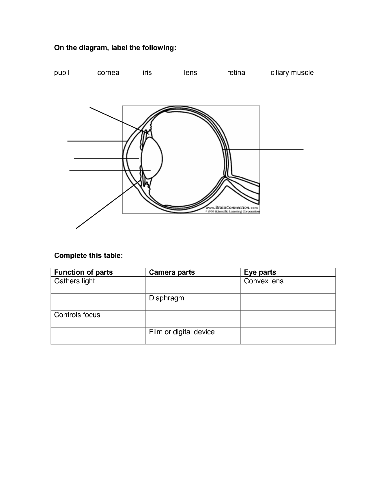 Worksheet Label Parts Of An Eye