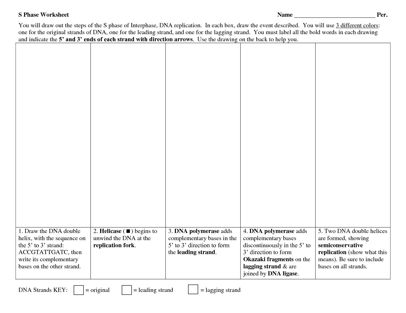 31 Skills Worksheet Directed Reading Section The Structure