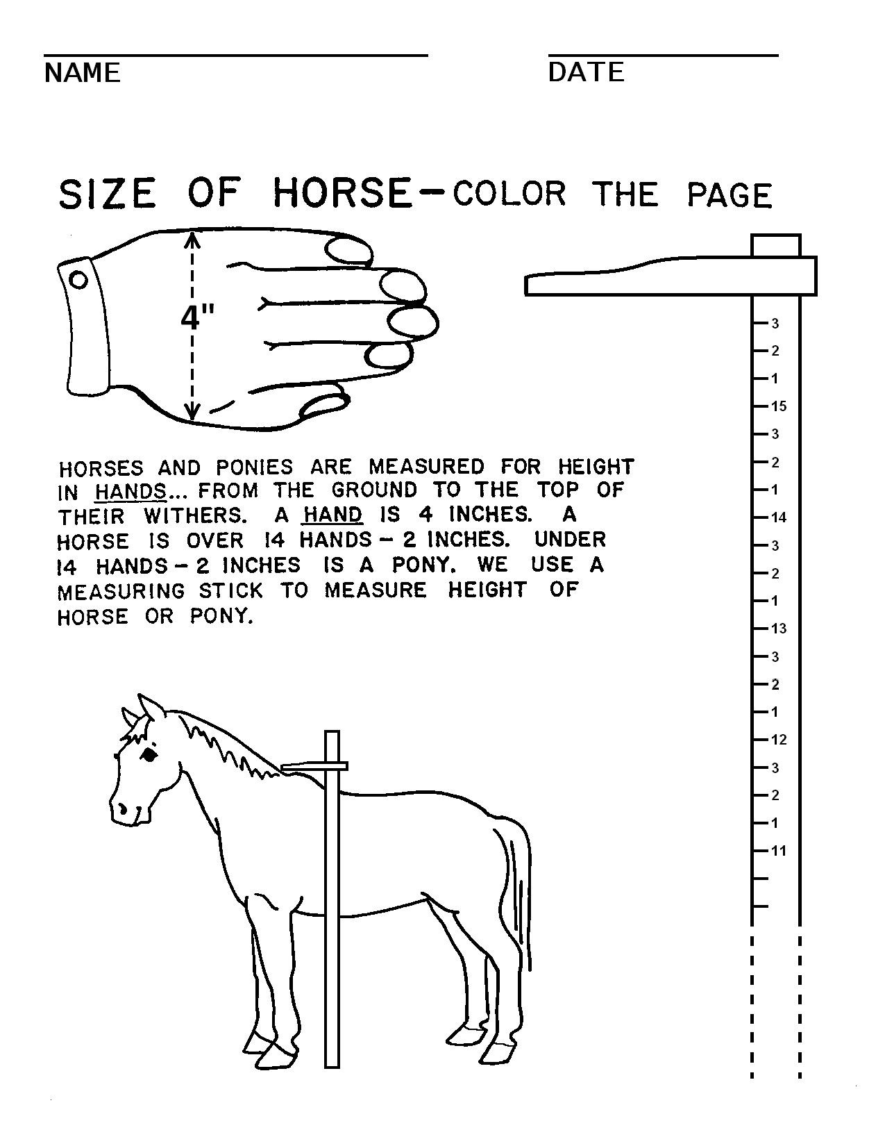 16 Best Images Of Horse Worksheets For Students