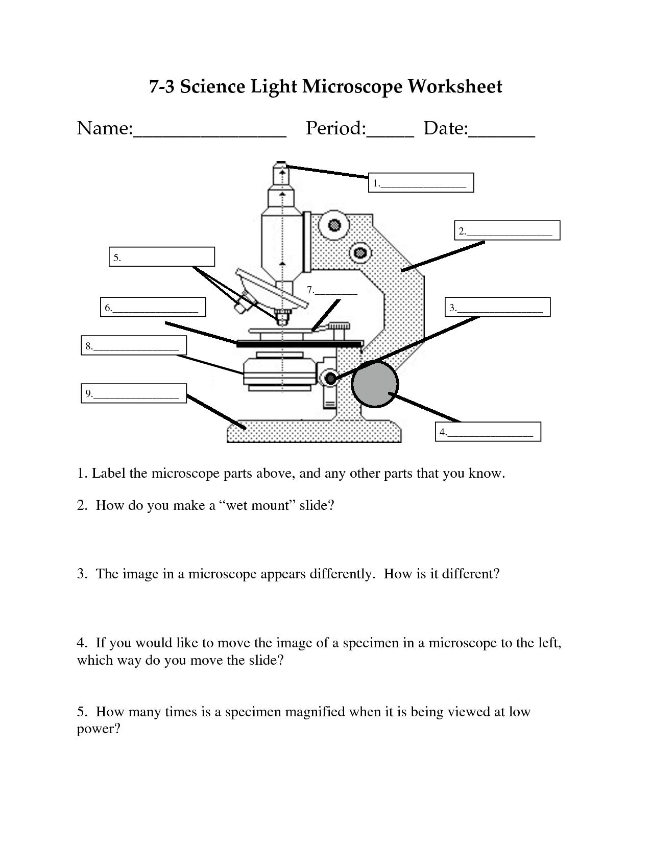 11 Best Images Of Microscope Diagram Worksheet