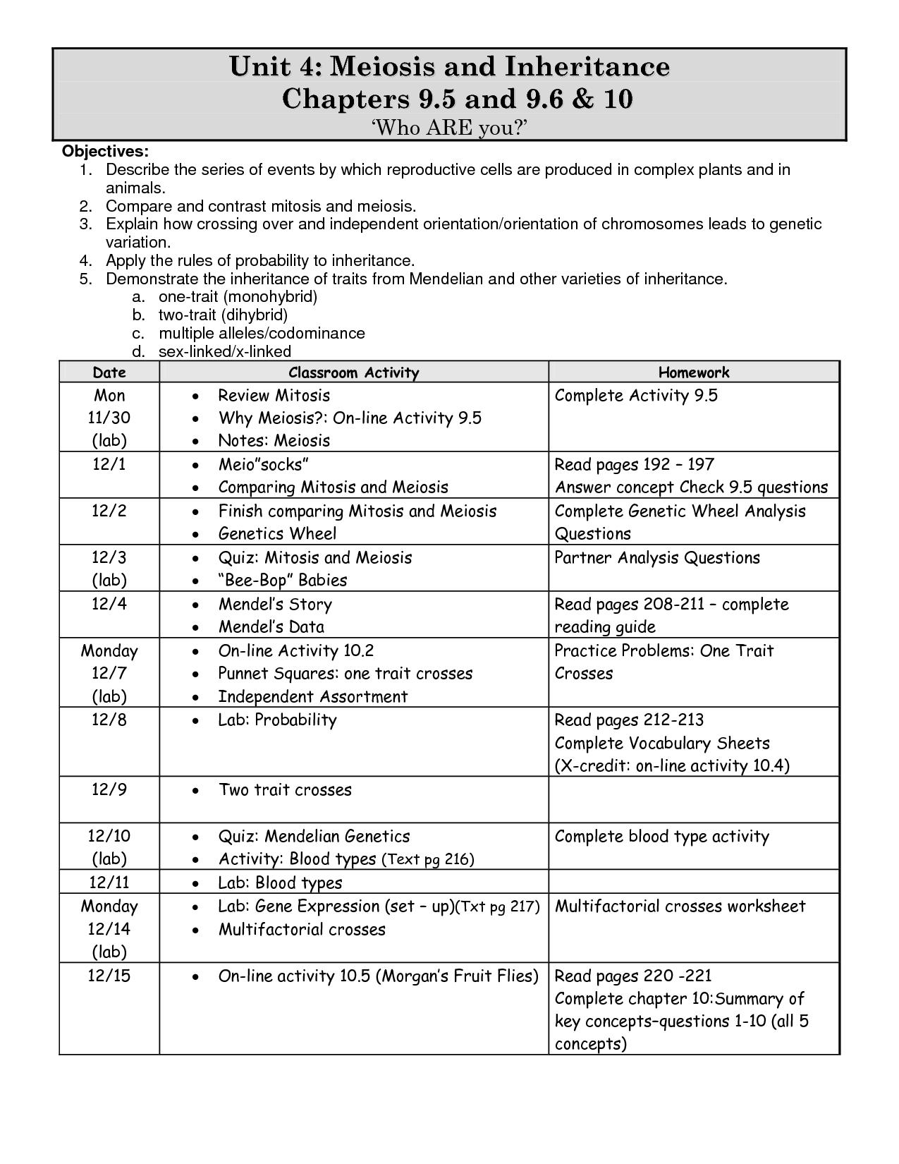 Worksheet Mendel And Meiosis Worksheet Answers Worksheet