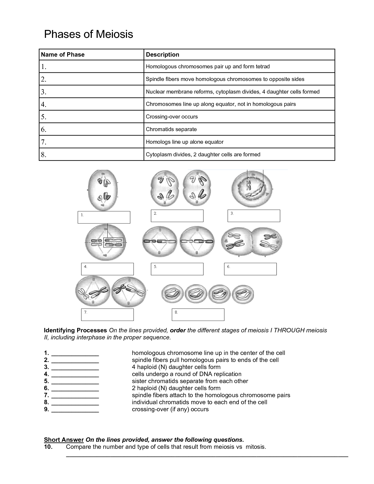 Chart Meiosis Worksheet