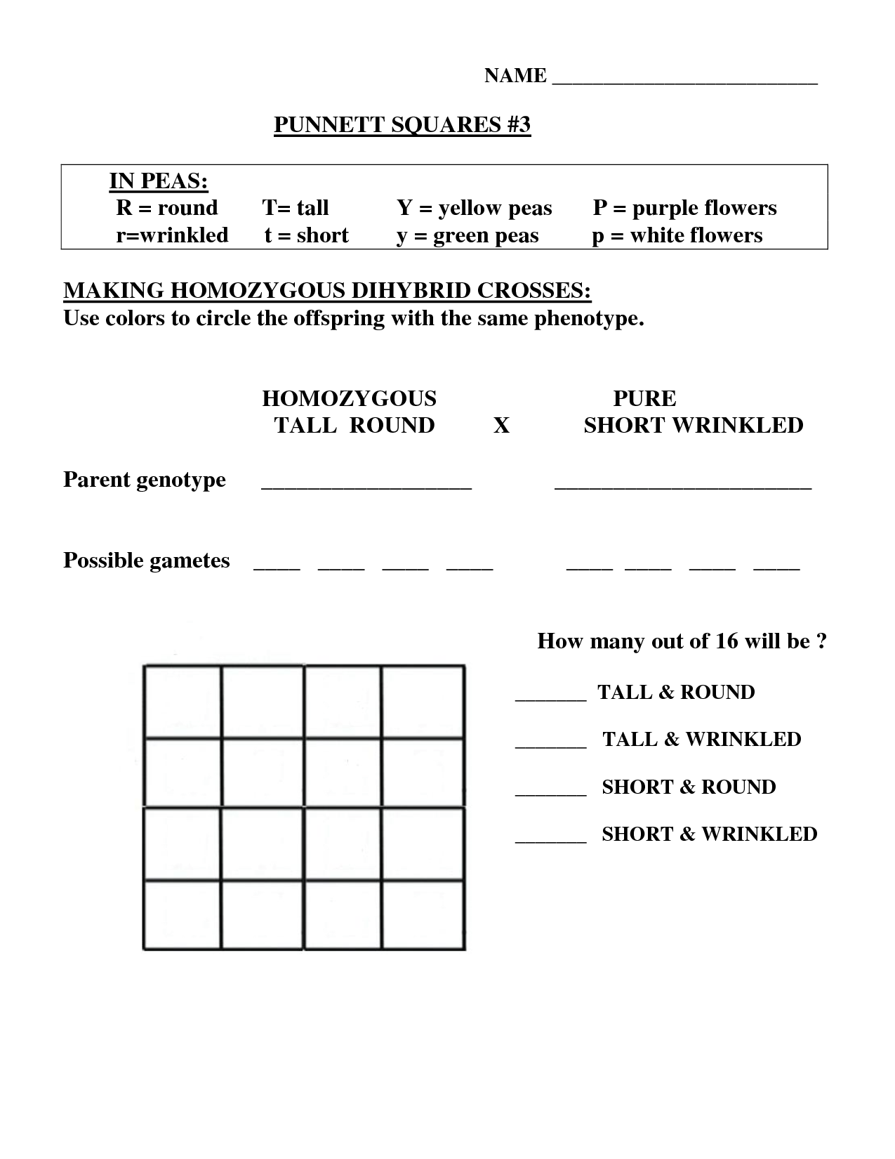 15 Best Images Of Dihybrid Cross Worksheet Answers
