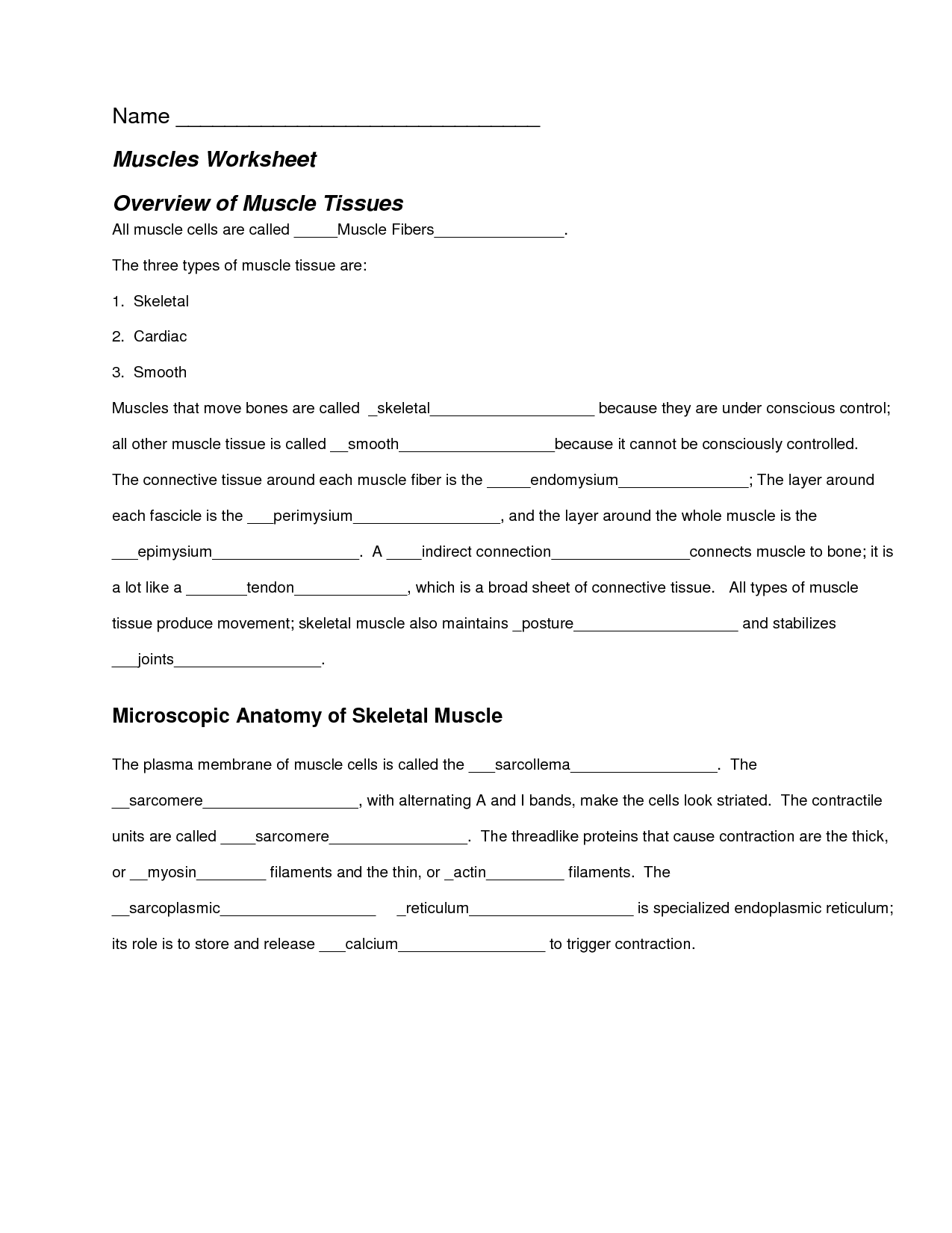 14 Best Images Of Muscle Review Worksheet