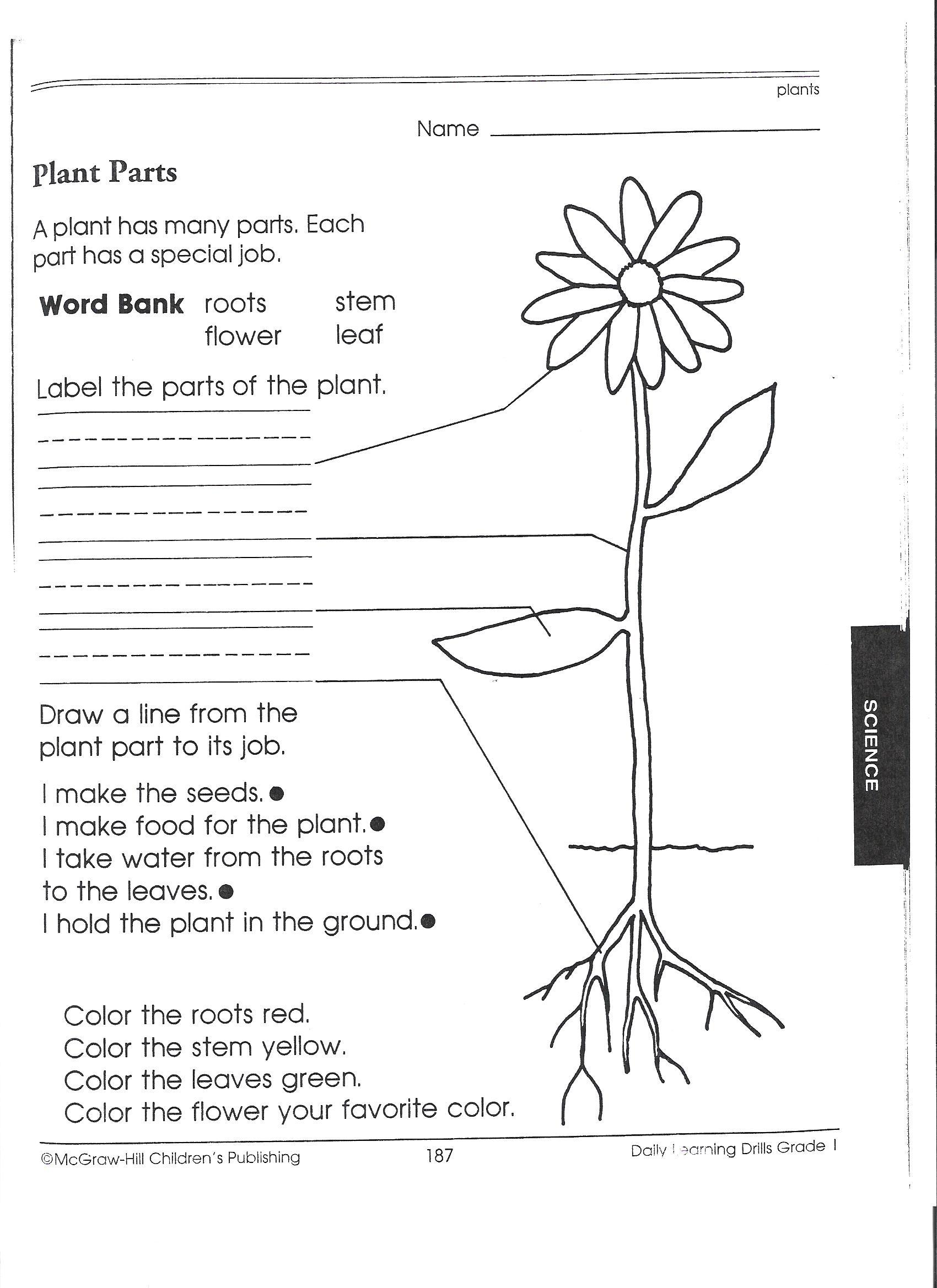 Anatomy Of A Volcano Worksheet For Preschool