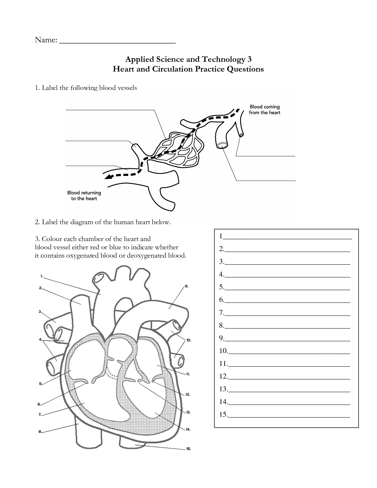 11 Best Images Of Blank Heart Diagram Worksheet With Word