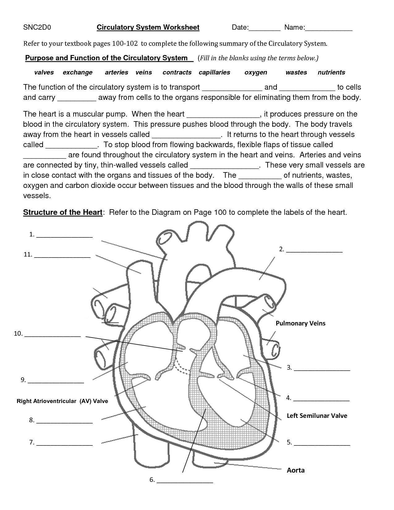 11 Best Images Of Blank Heart Diagram Worksheet With Word Bank