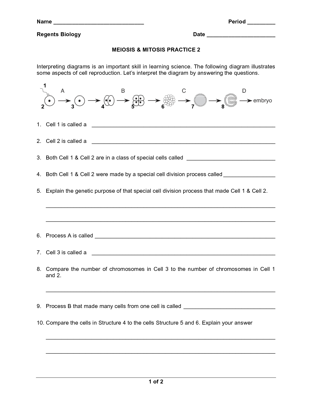 16 Best Images Of Meiosis Practice Worksheet