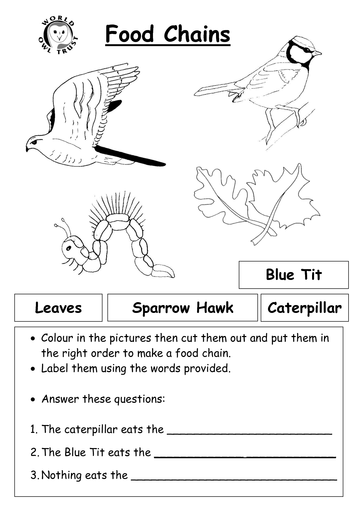 Food Chains And Webs Skills Worksheet Answers