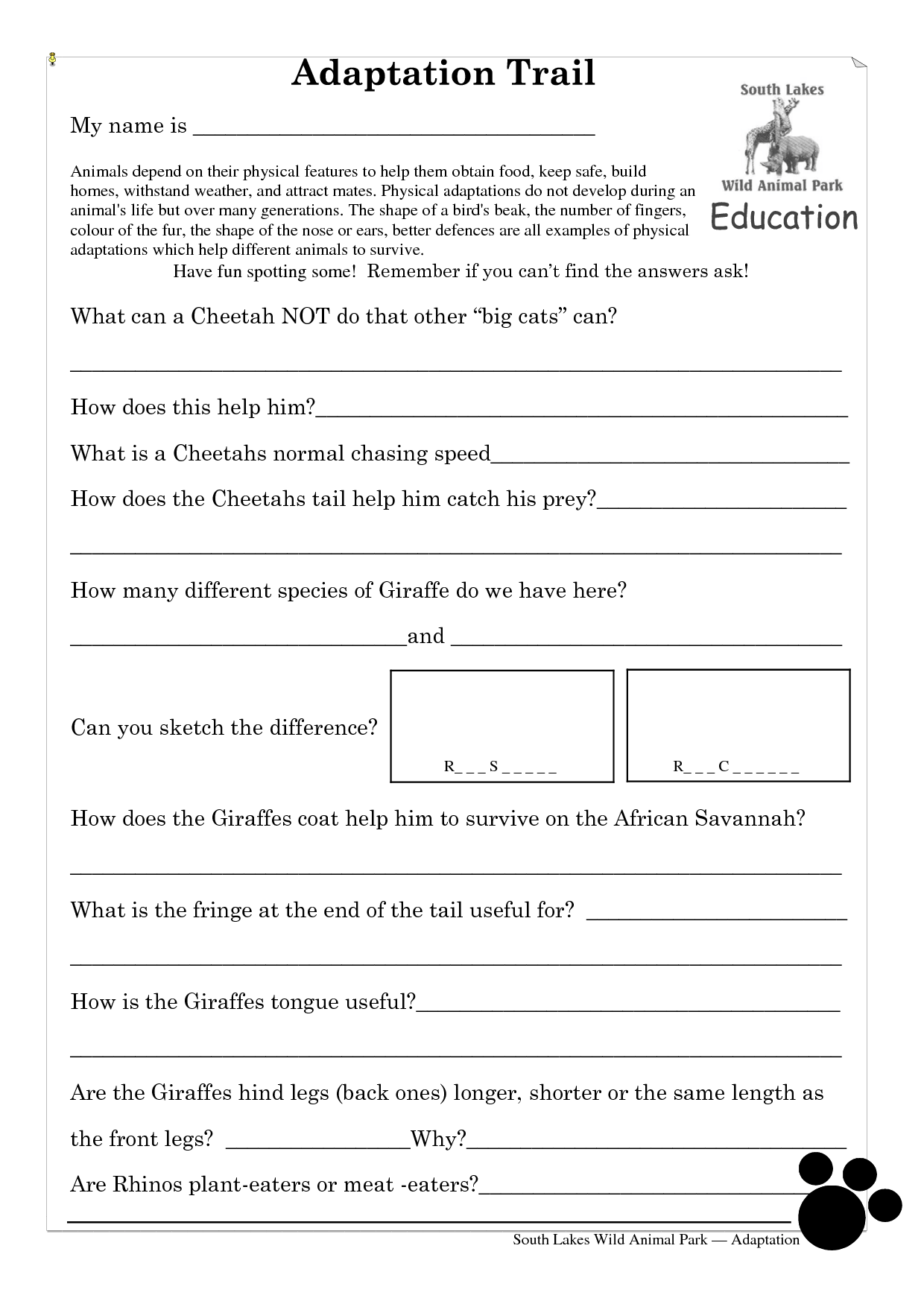 Animal Feet Adaptations Worksheet
