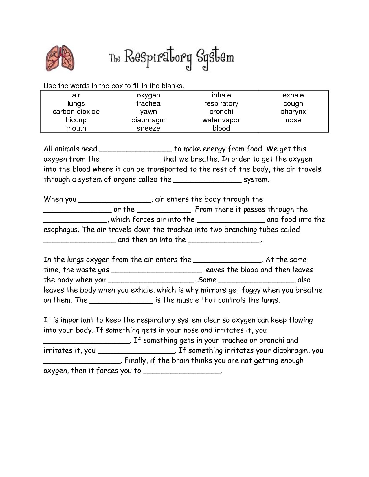 Your Lungs Worksheet