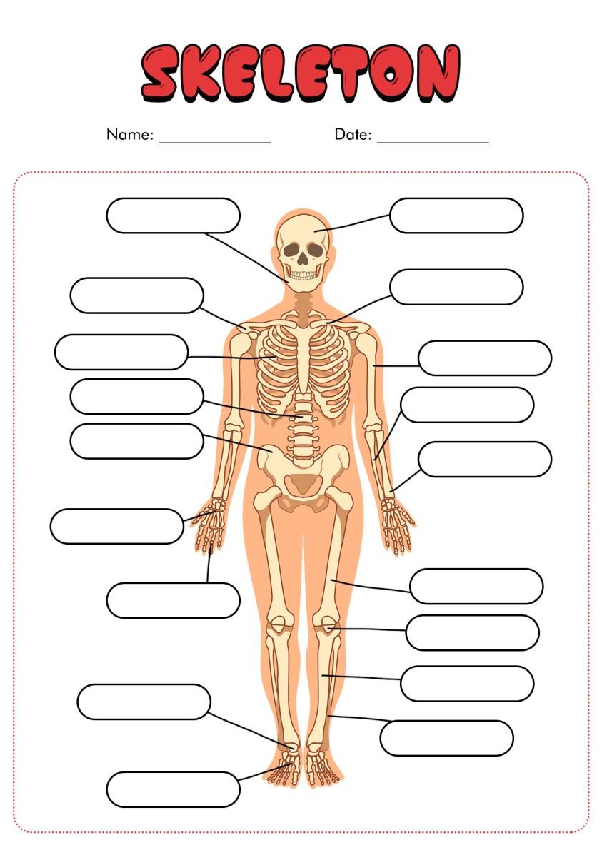 11 Best Images of Blank Anatomy Worksheets - Human Anatomy ...