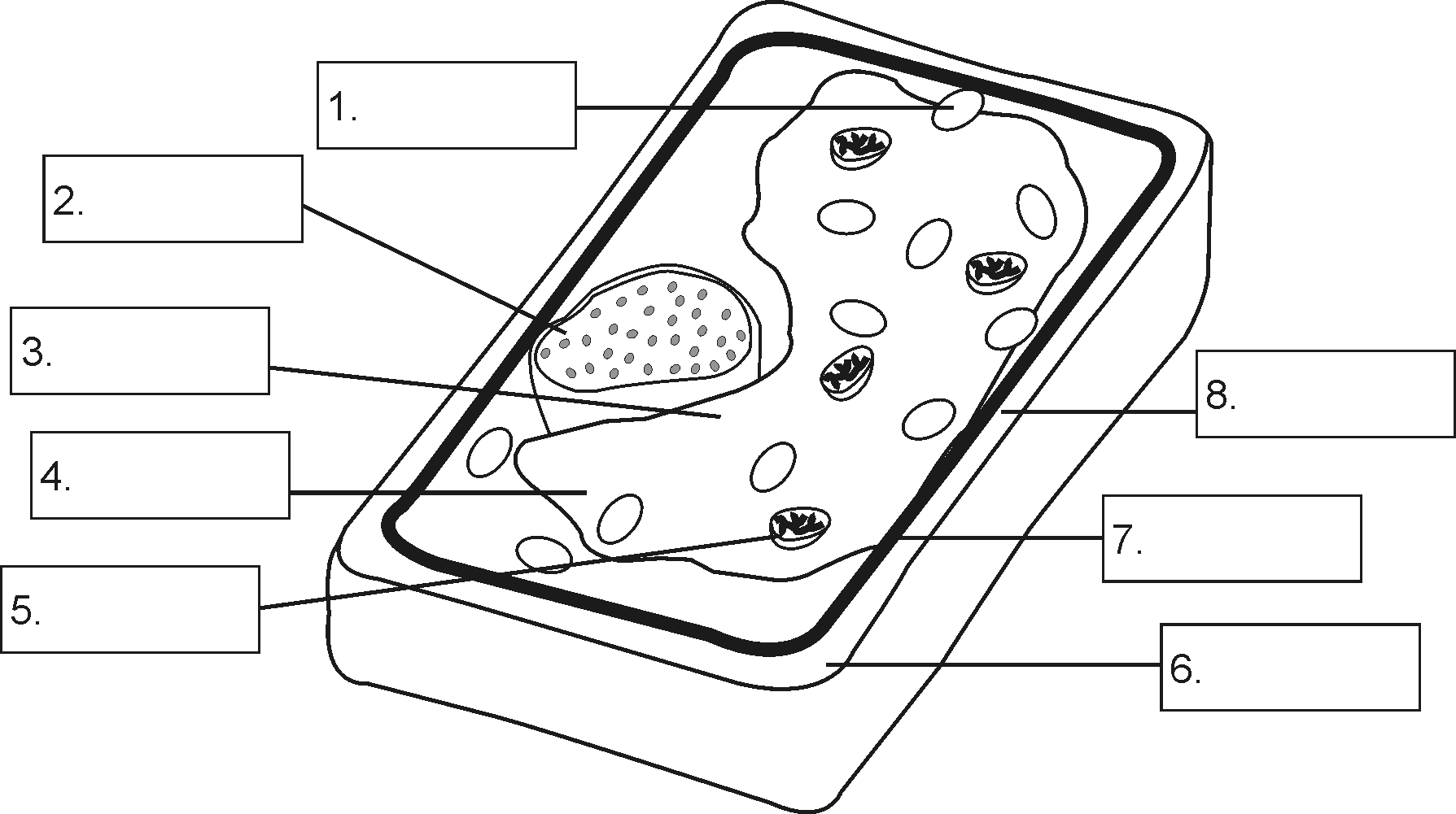 Plant Cell Diagram Coloring Pages