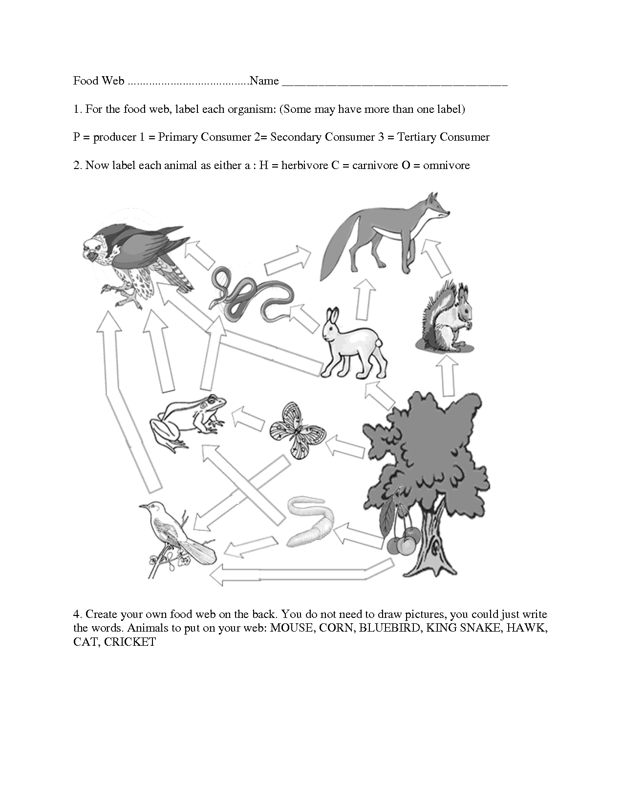 Food Chain Worksheet Cloze