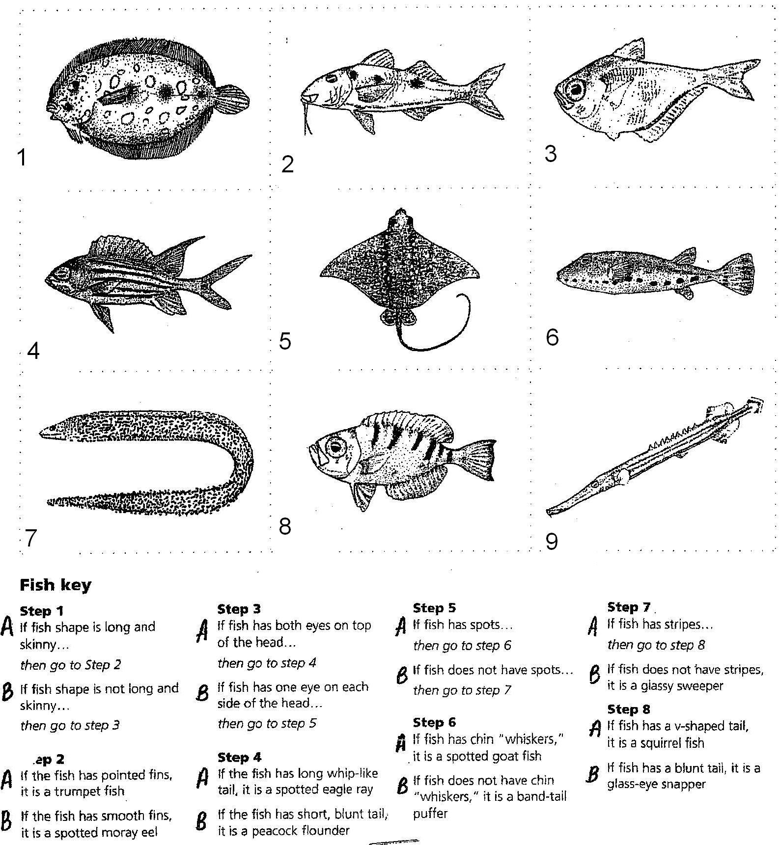 15 Best Images Of Dichotomous Key Worksheet Students