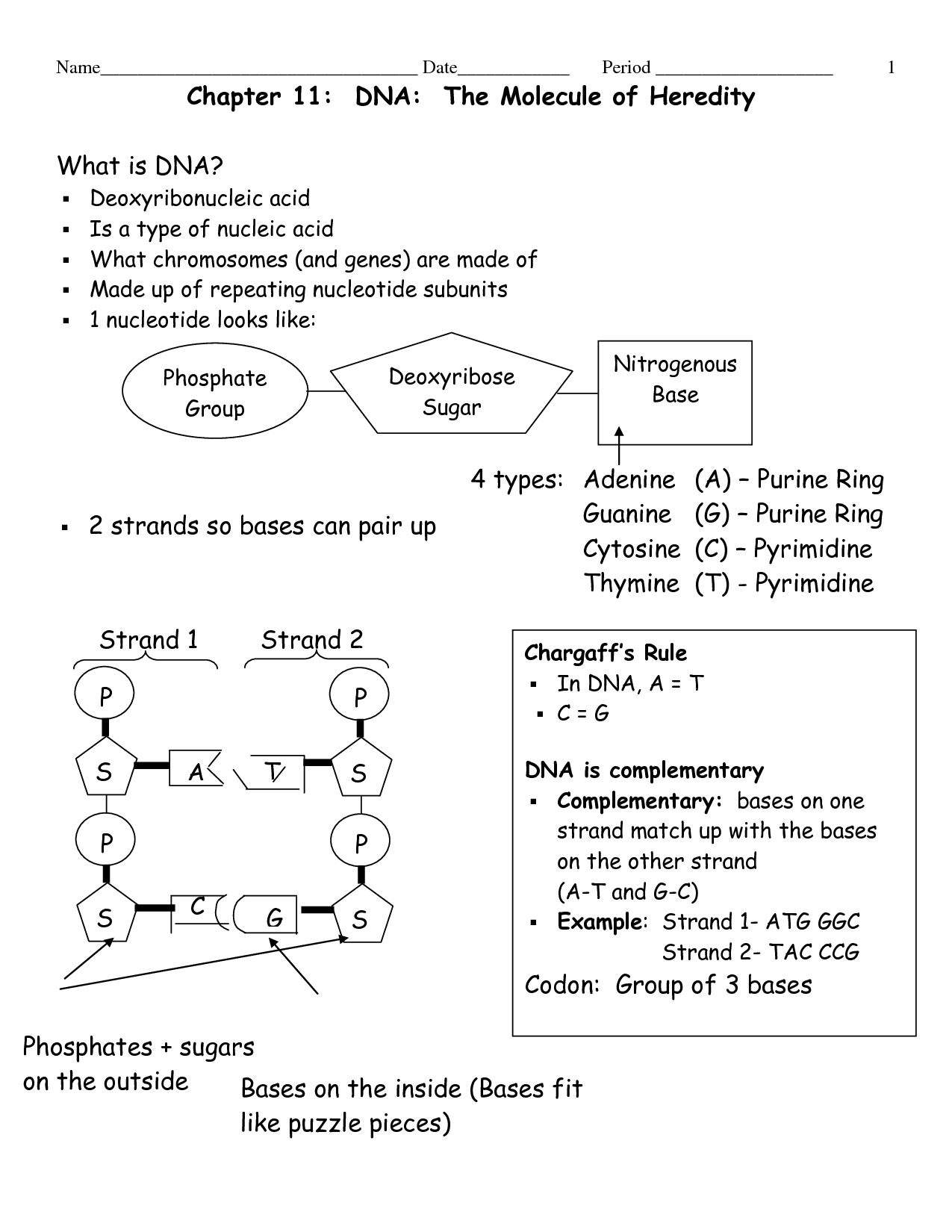 Cells Heredity Worksheet