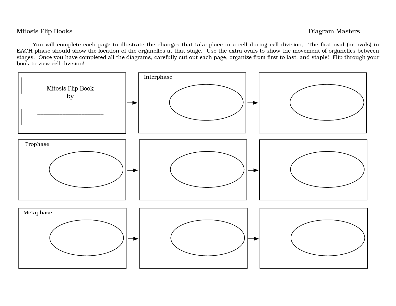 13 Best Images Of Diagram Mitosis Worksheet Answers