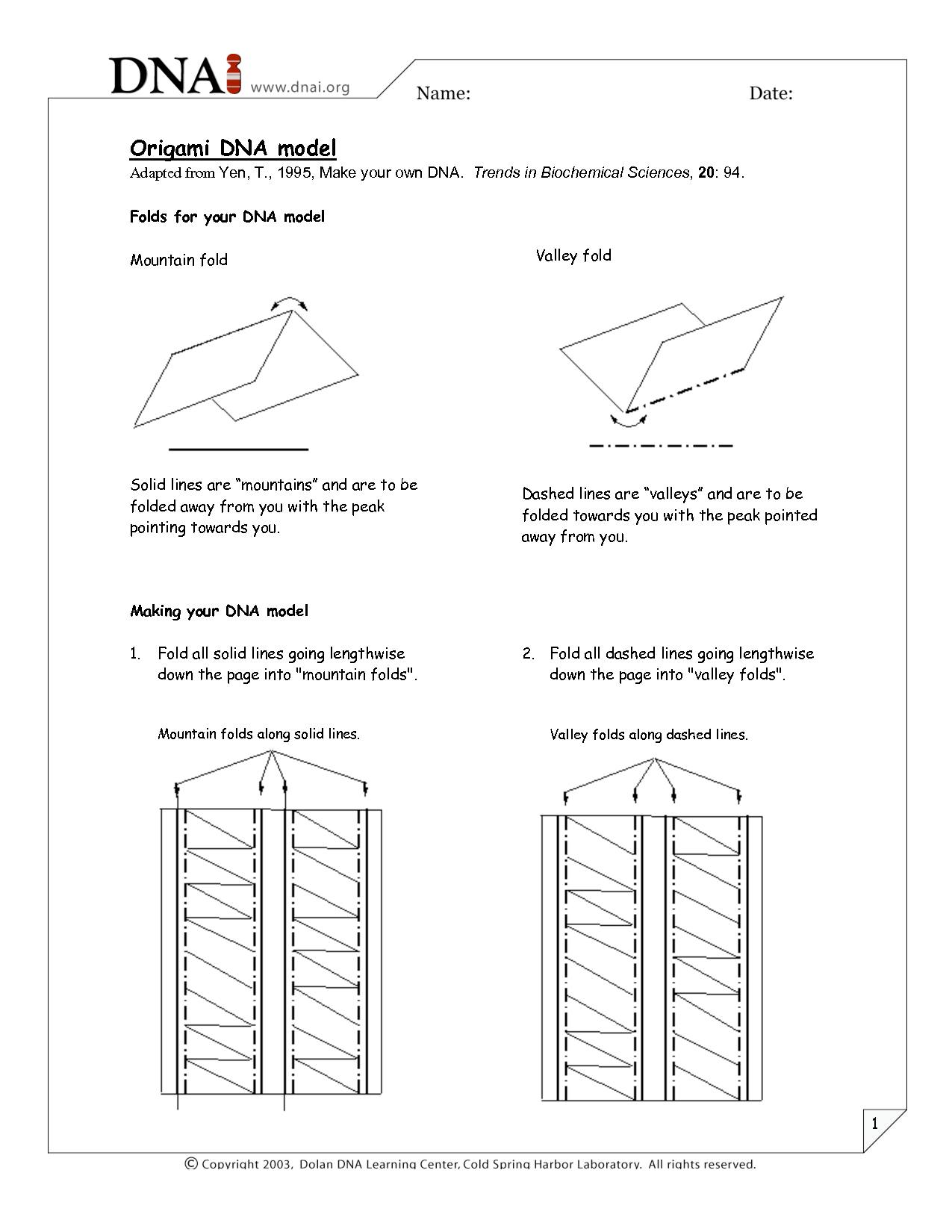 Dna Worksheet Elementary