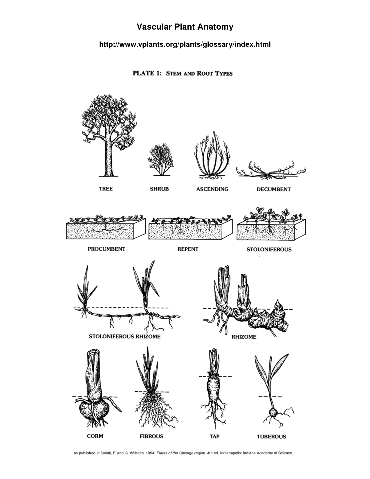 Plant Worksheet Middle School