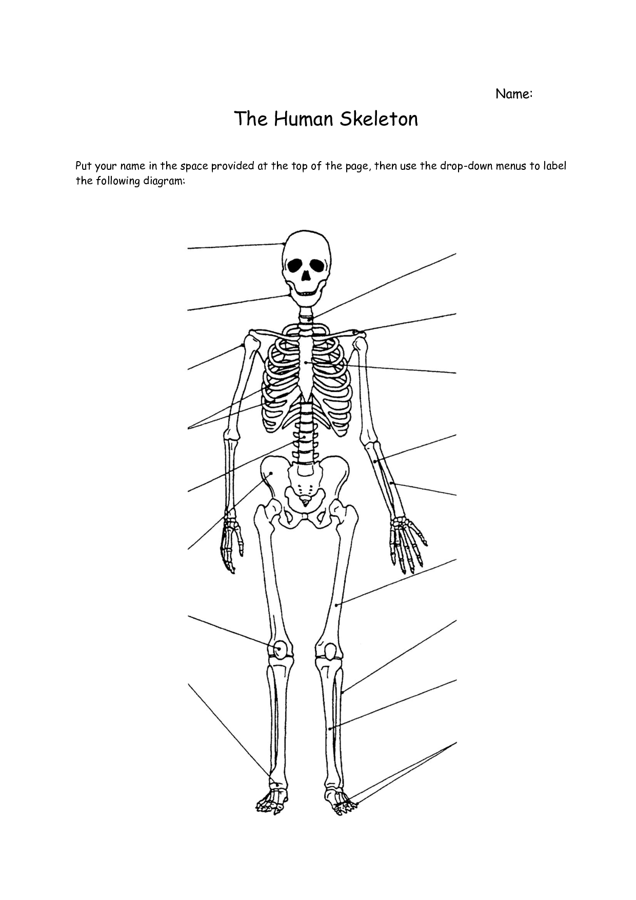 13 Best Images Of Skeleton Bones Labeled Worksheets