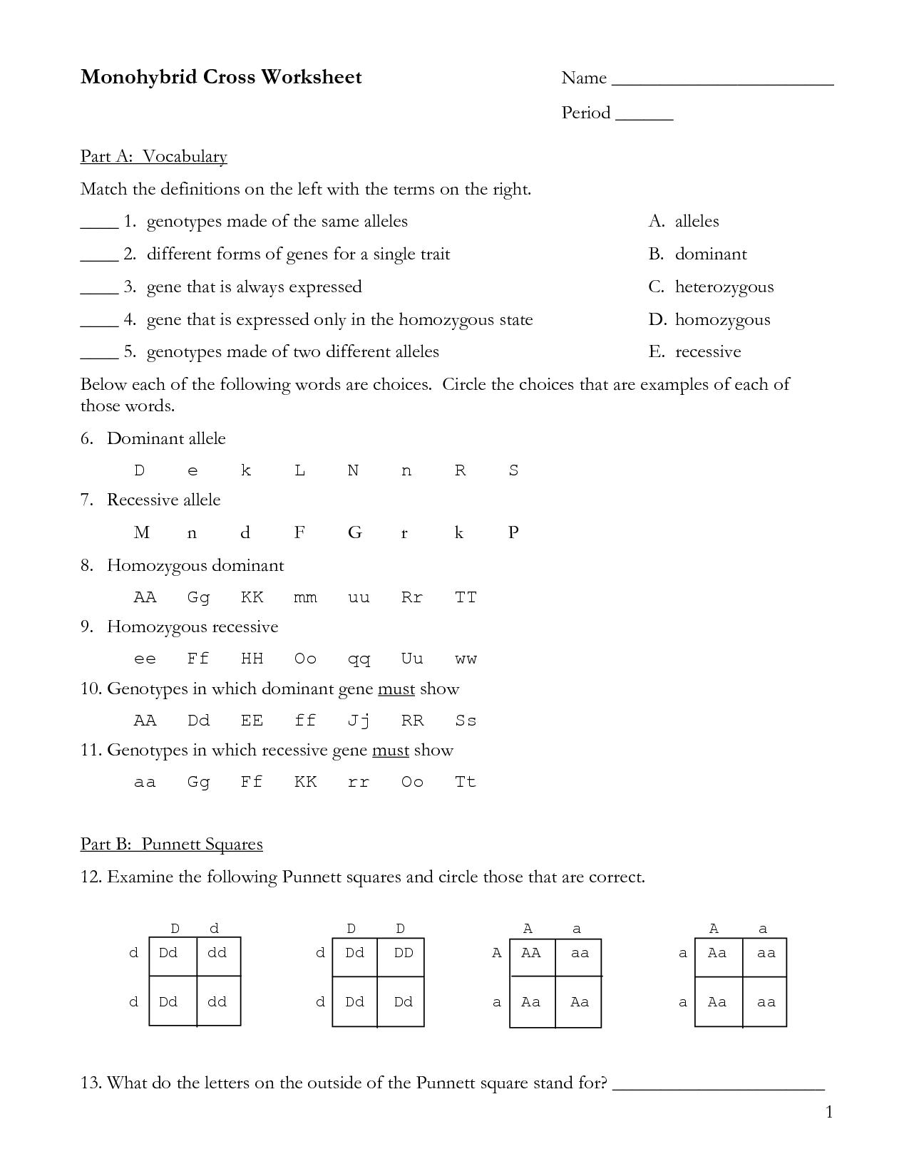 30 Monohybrid Crosses Practice Worksheet Answer Key
