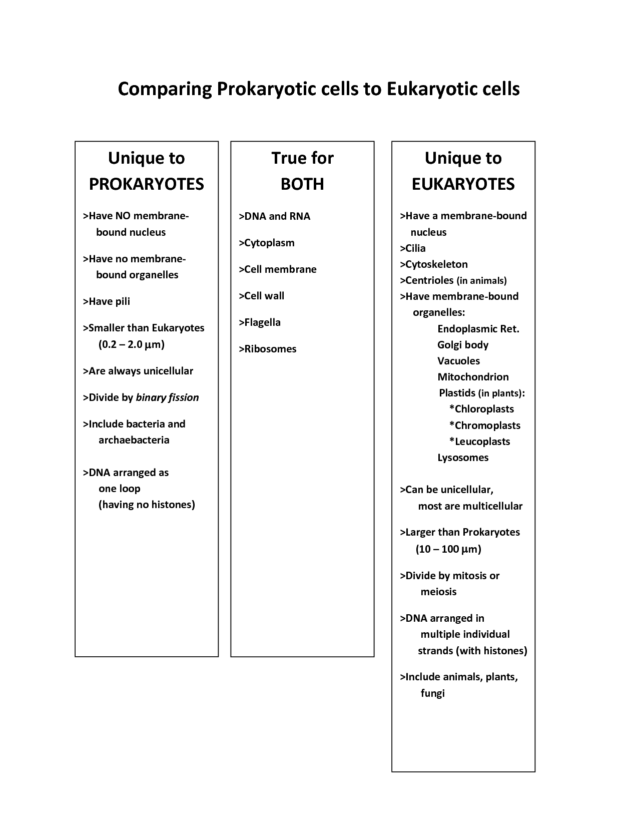 Prokaryotic And Eukaryotic Worksheet Prokaryotic And