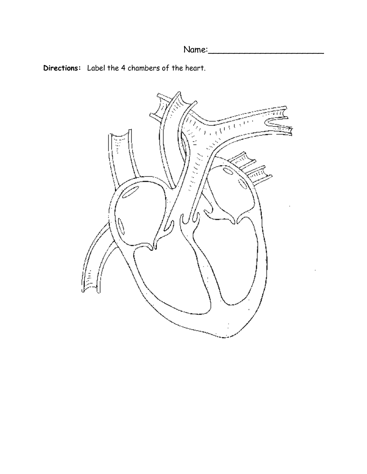 15 Best Images Of Structure Of The Heart Worksheet