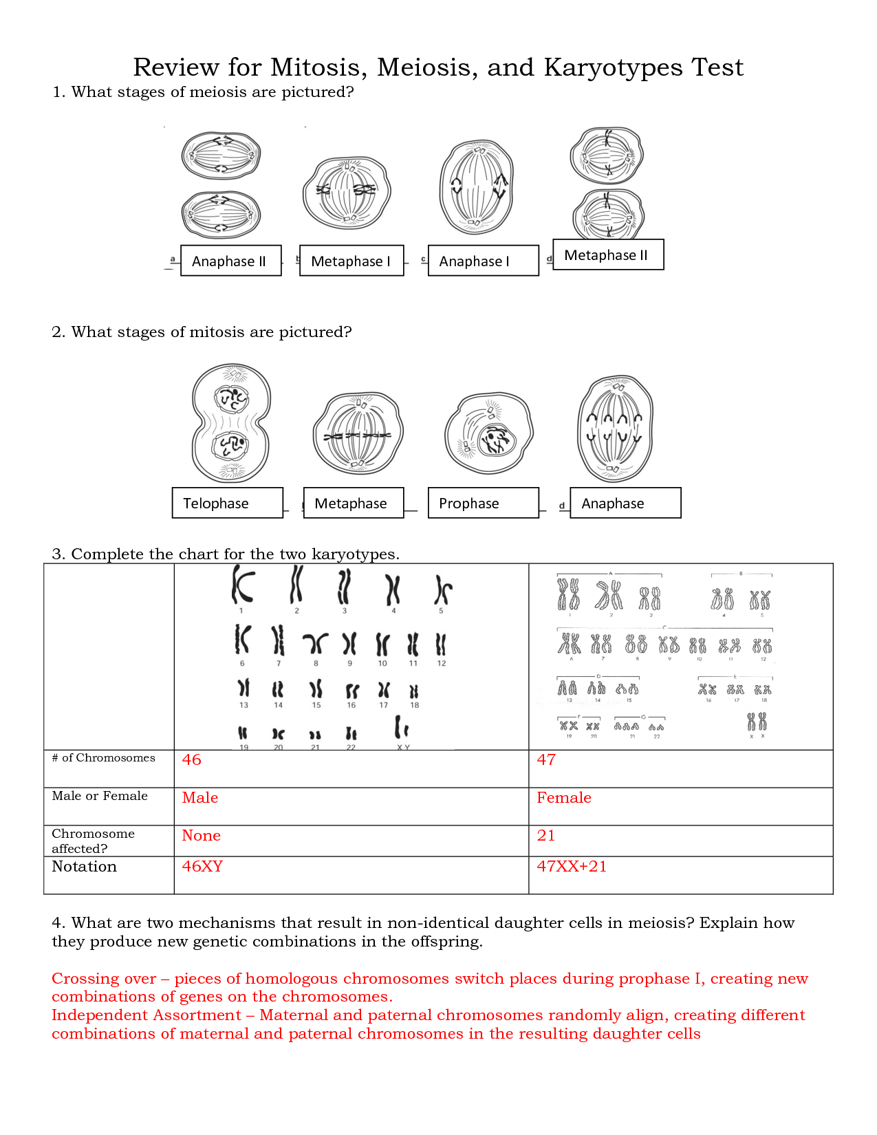 Meiosis Worksheet Questions