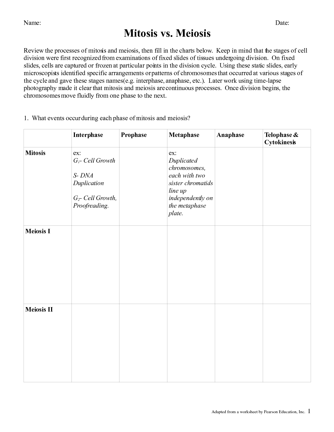 15 Best Images Of Mitosis Vs Meiosis Worksheet Answers