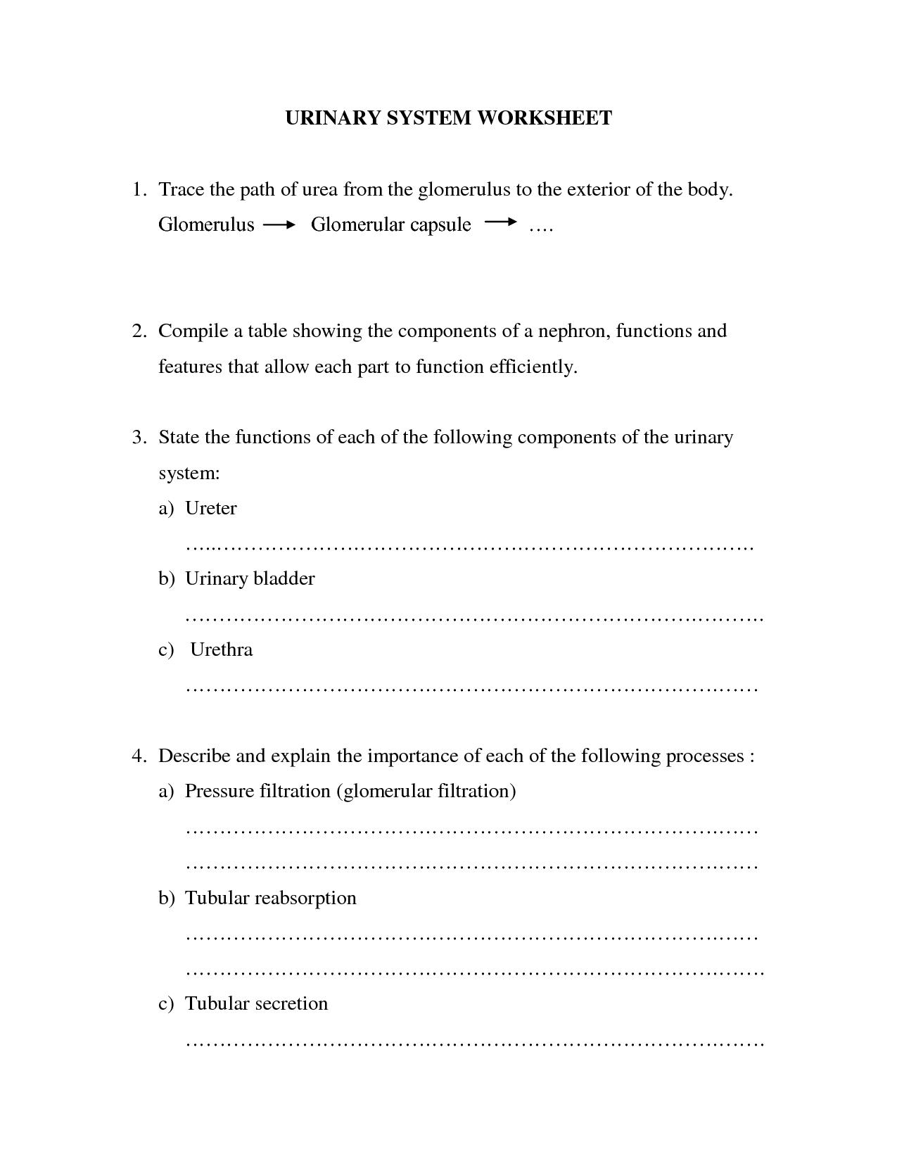 Beka Urinary System Worksheet