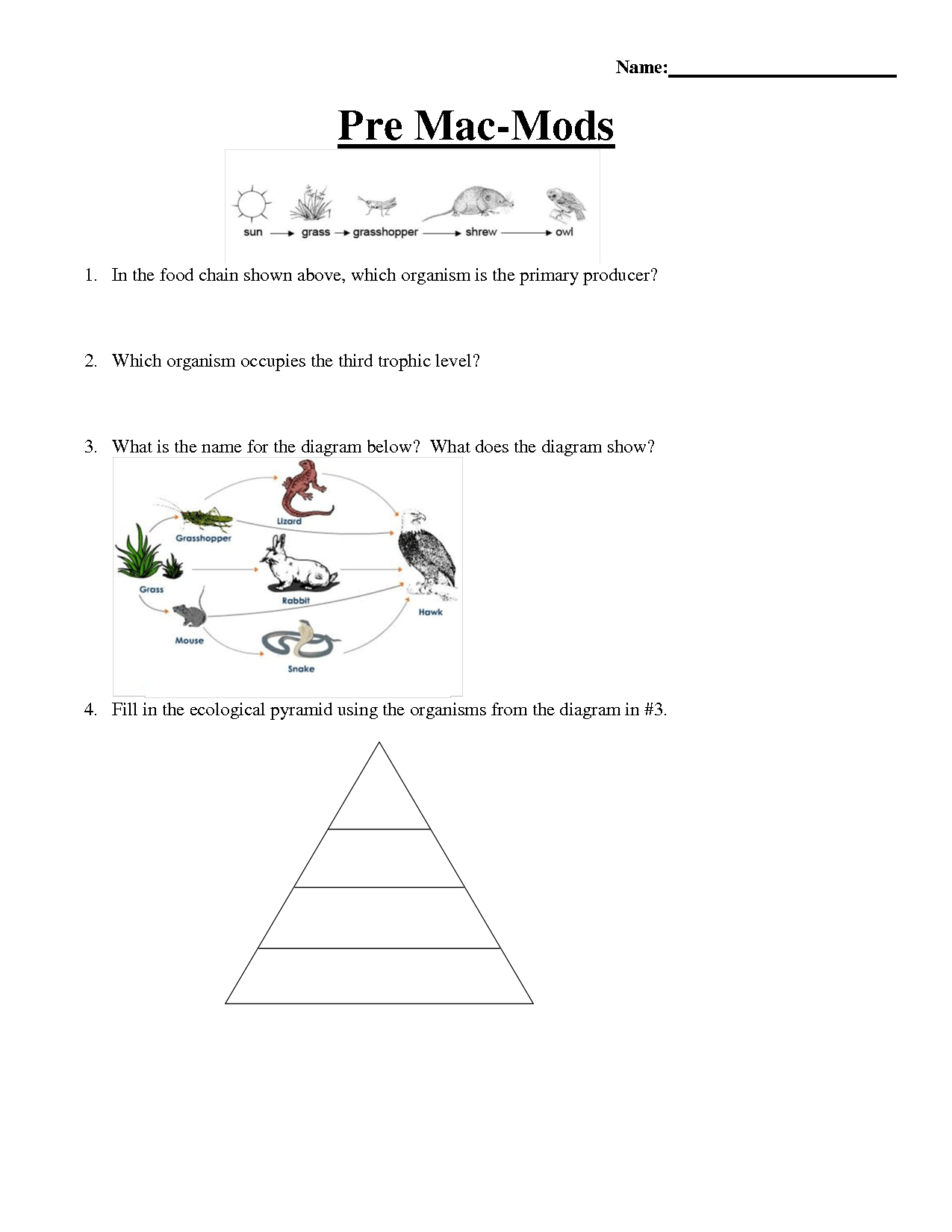 12 Best Images Of Worksheets Food Chain Web Pyramid