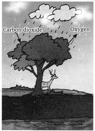 CBSE Class 7 Science Forests Our Lifeline Worksheets 1