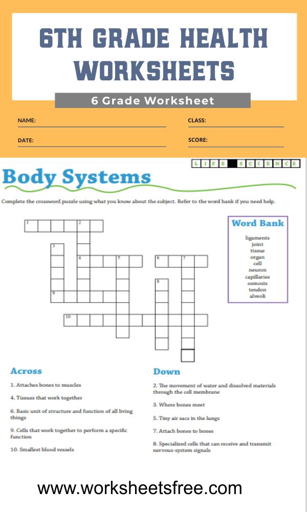 6th grade health worksheets 2