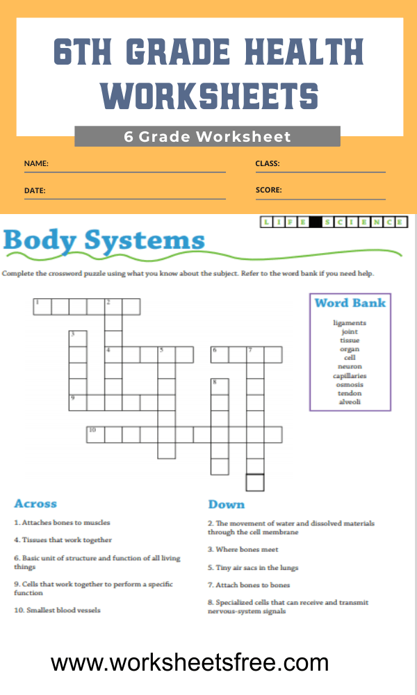 6th grade health worksheets 2