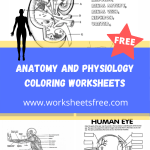 Anatomy And Physiology Coloring Worksheets