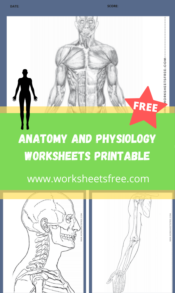 Anatomy and Physiology Worksheets Printable