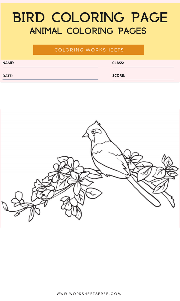 Bird Coloring Page - Animal Coloring Pages Worksheets